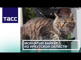 Мохнатый байкер из Иркутской области