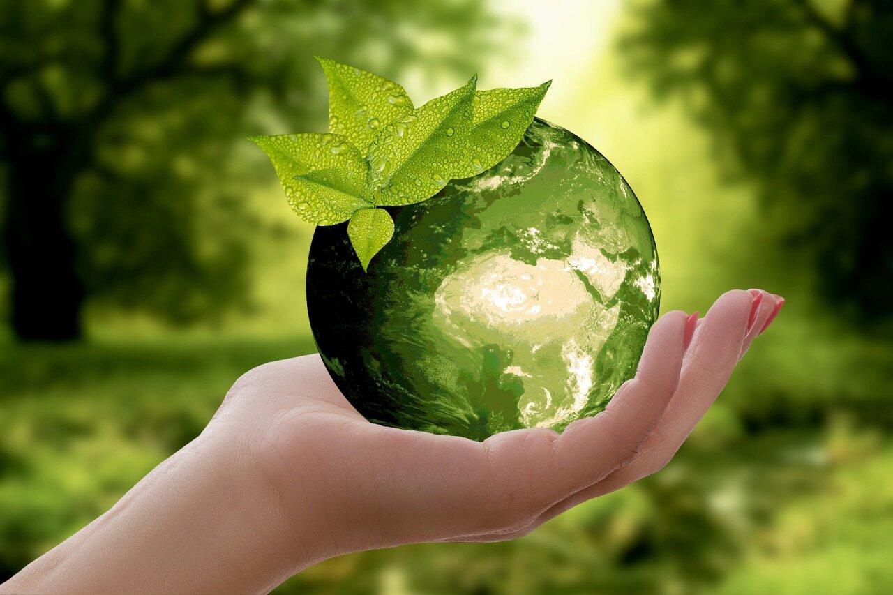Дни экологического просвещения пройдут в прямом эфире «1ЭКОТВ.РФ»