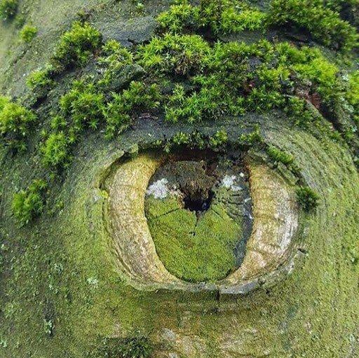 Глаз природы (источник: gofazenda)