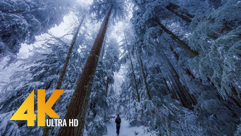 Walking in a Snow Forest 4K UHD with Piano Music 2 Squak Mountain Fireplace Trail WA