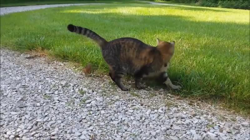 Кто с кем играет добыча с кошкой или кошка с добычей