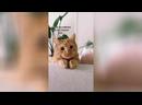 Кот из Шрека умильная мордочка пушистика очаровала Сеть