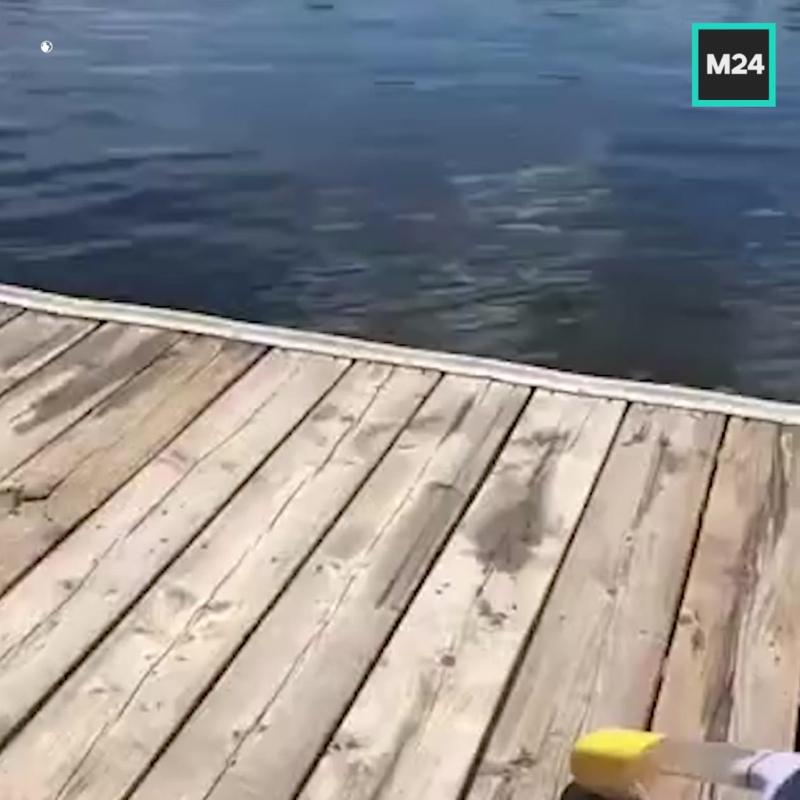 Пёс чиллит в воде — Москва 24