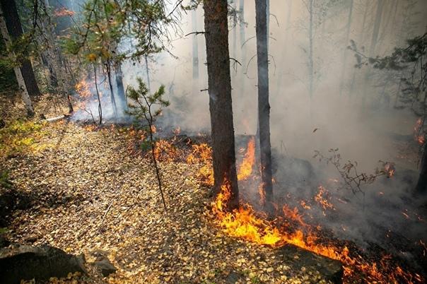 После летних природных пожаров возбуждено пять уго...