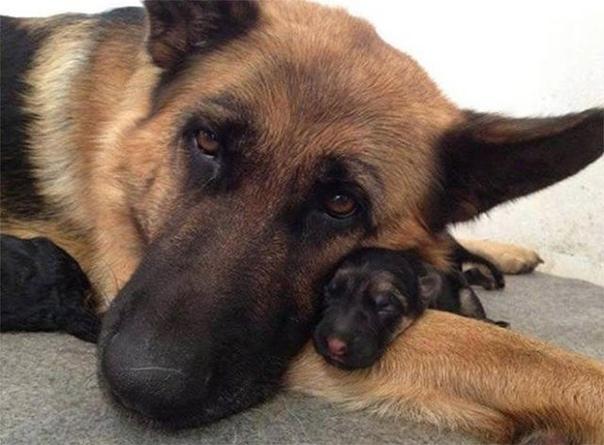 Чудесное фото  Мама с дочкой . Ну правда ведь прелесть