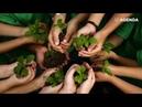 Международный День Земли: простые способы помочь нашей планете