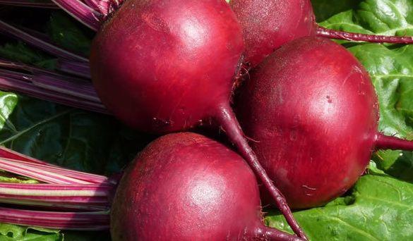 Как получить урожай сладкой и сочной свеклы