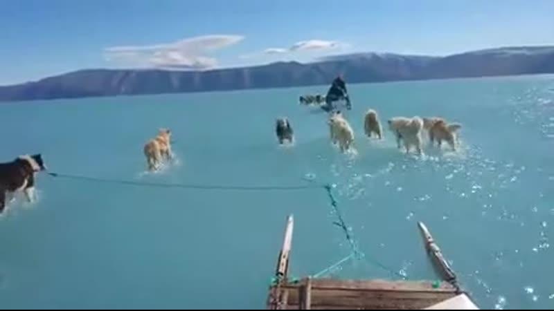 Юг Гренландии что-то нехорошее с климатом происходит на нашей планете