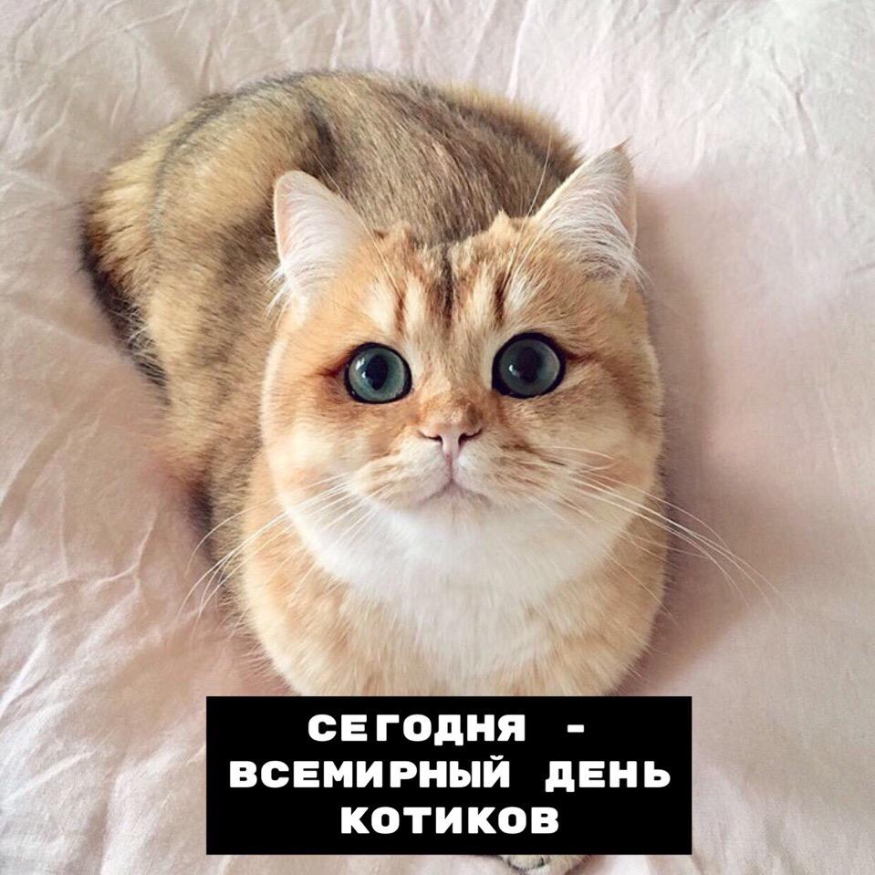 С днём котиков!