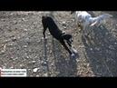 Сочинские собаки Жизнь в Сочи