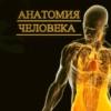 Анатомия человека. Видеоатлас Акланда.
