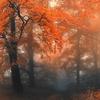 Пейзажи осень