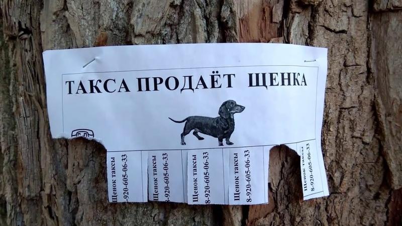 Умом Россию не понять Прикольные объявления