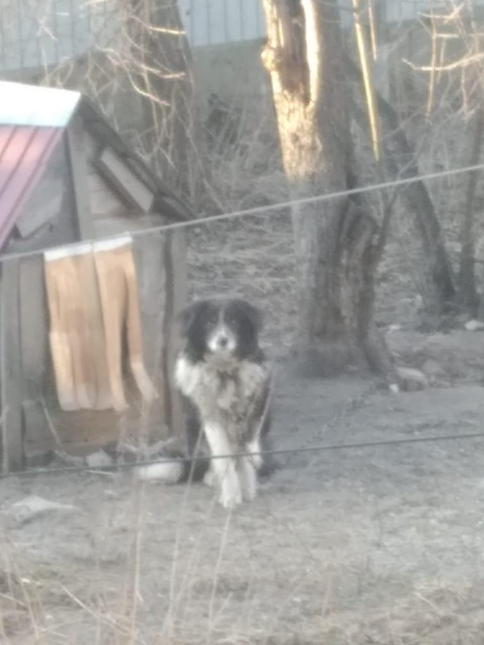 Помогите пожалуйста пристроить собаку в частный дом, дворняжка 11 лет, может кто возьмёт?