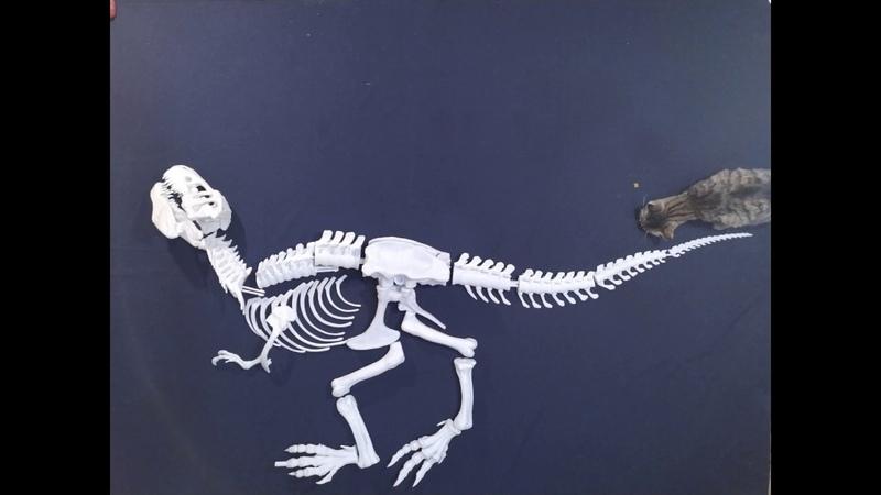 Детеныш Тираннозавра Рекса масштабом 11\ tyrannosaur Rex