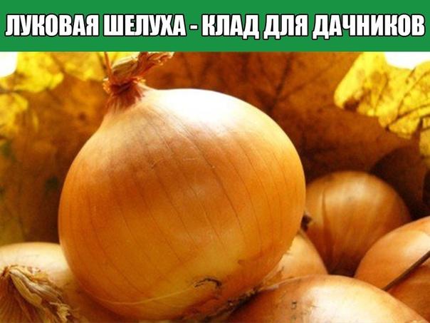 Мы порой проходим мимо старых и проверенных средств повышения урожая или борьбы с вредителями и болезнями